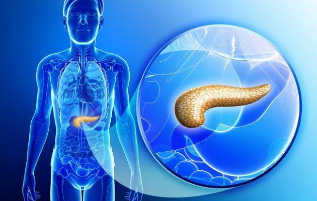 Какой орган вырабатывает инсулин: описание, функции